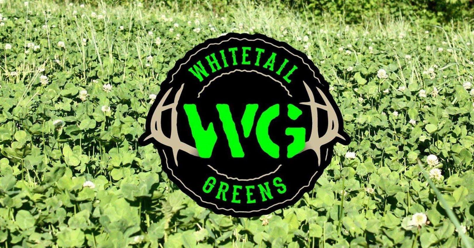 whitetail.jpg