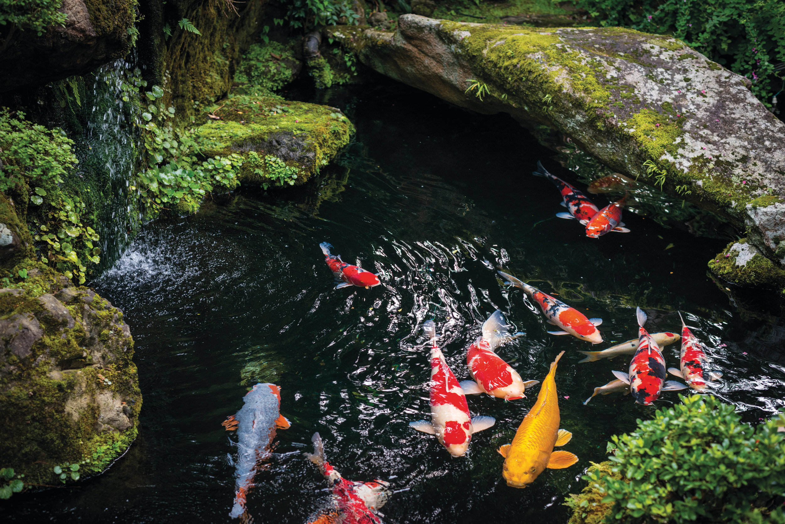 Pond Ecosystem FAQ