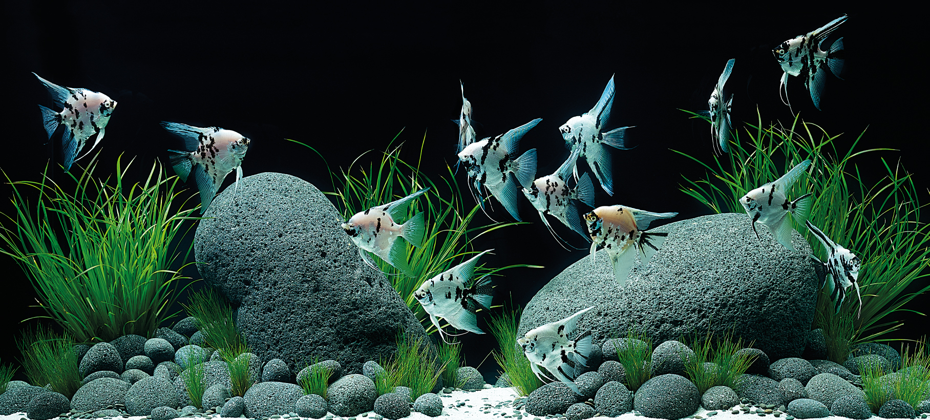 Aquascaping Inspiration Oase Living Water