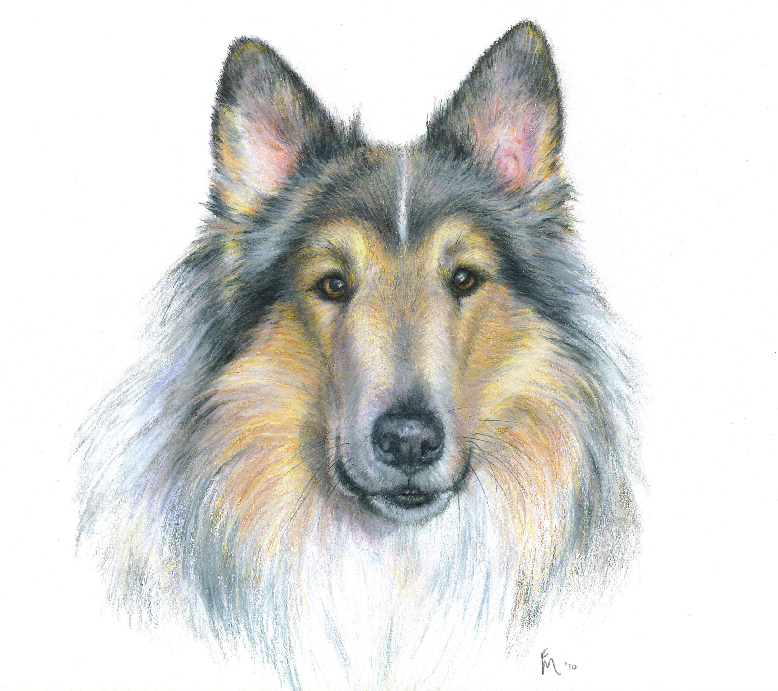 Colored Pencil - My favorite colored pencils to work with are Prismacolor, they are soft and waxy and render fine details. Colors are created by layering to exactly match your pet's coat colors.The secret to a great pet portrait is to capture their eyes!
