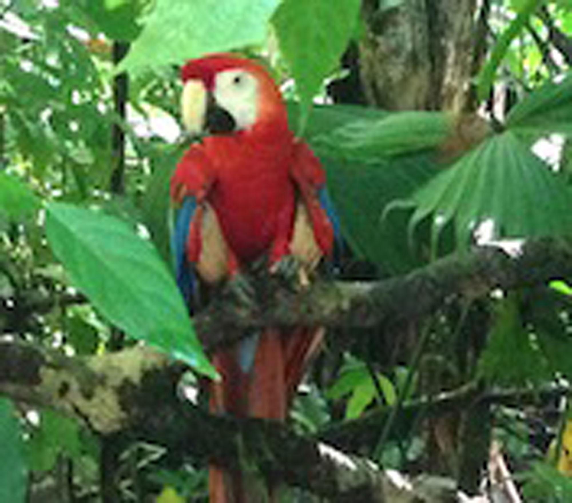 costa-rica-macaw.jpg