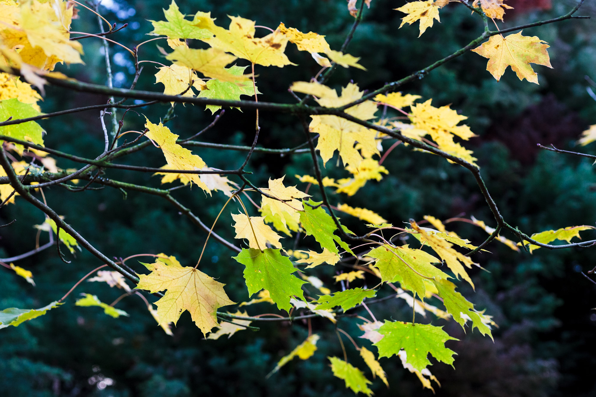 dansoleyphotography-lukesland-gardens-autumn-2018-7.jpg