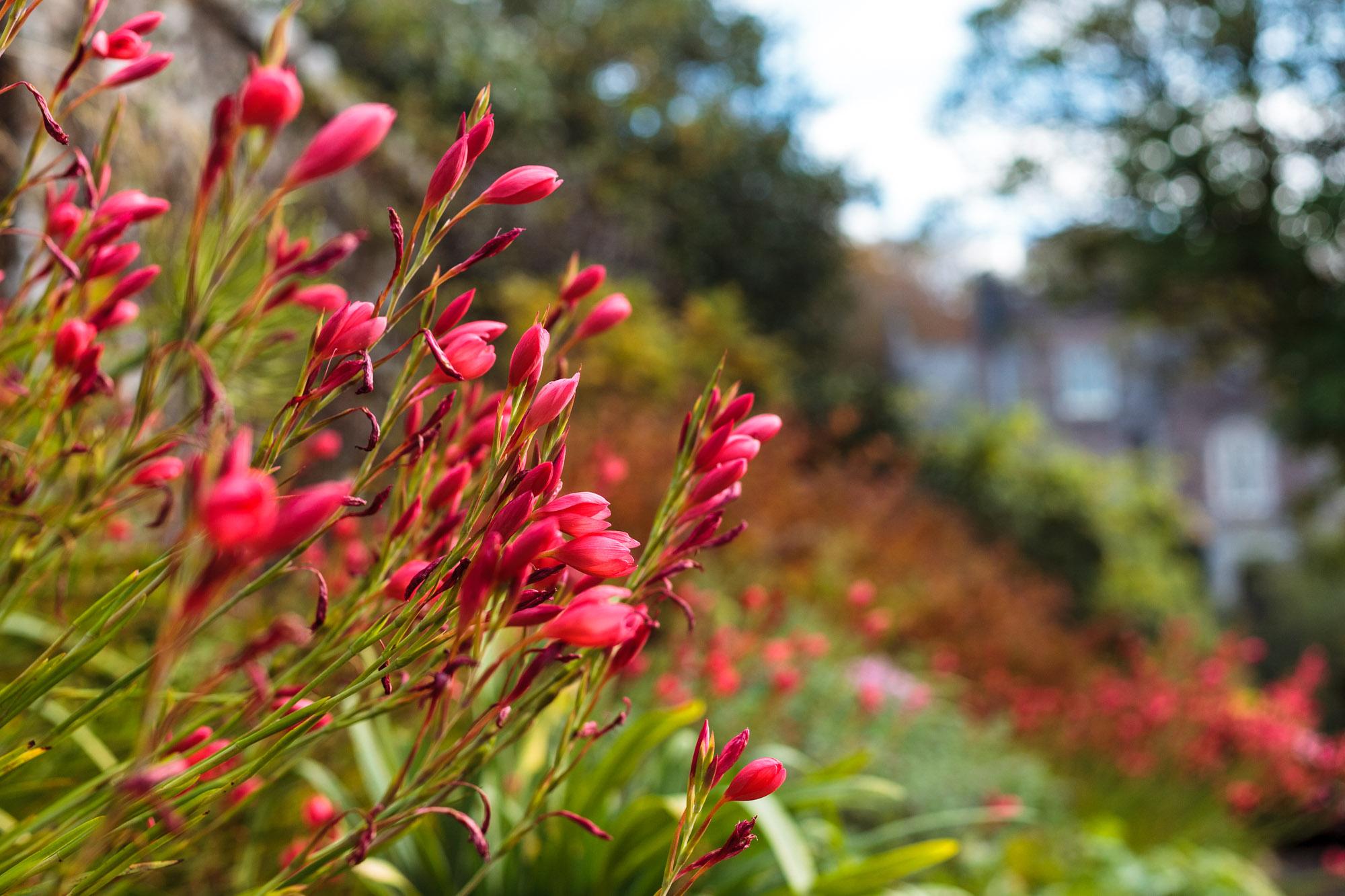 dansoleyphotography-lukesland-gardens-autumn-2018-17.jpg