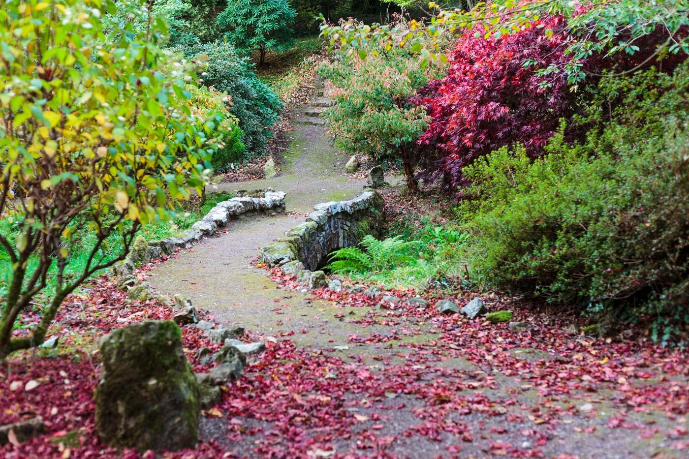 lukesland-gardens-autumn-dan-26.jpg