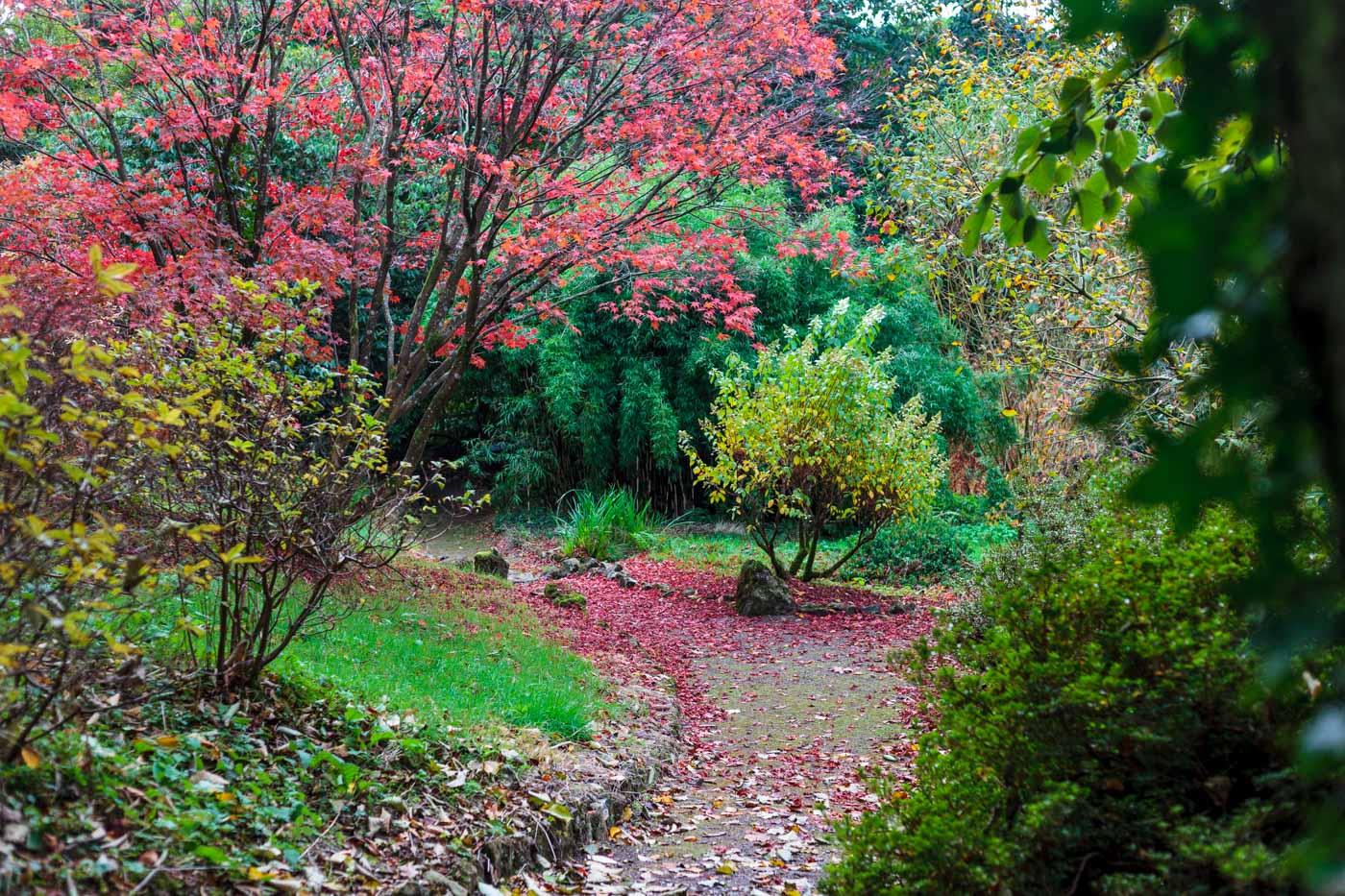 lukesland-gardens-autumn-dan-25.jpg