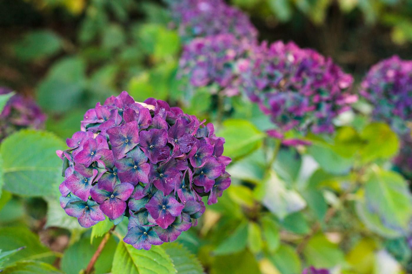 lukesland-gardens-autumn-dan-6.jpg