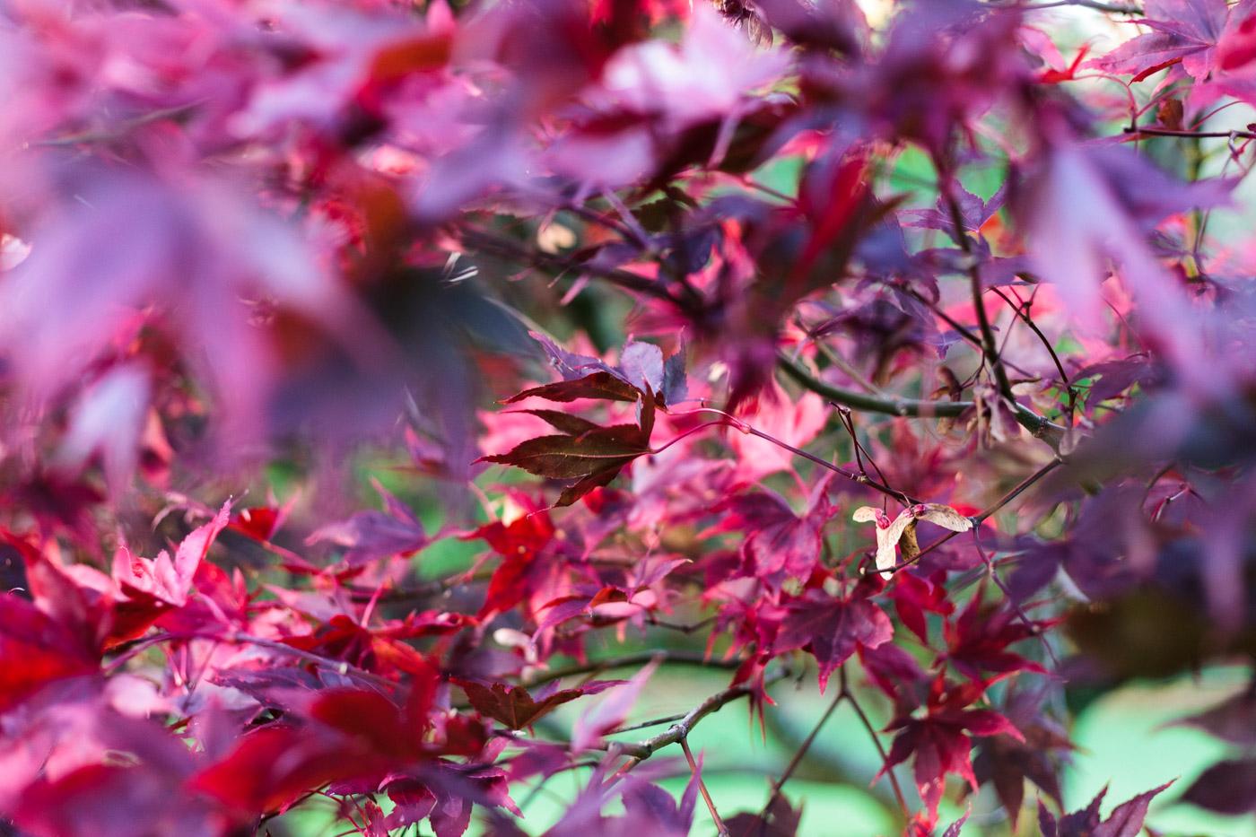 lukesland-gardens-autumn-dan-2.jpg
