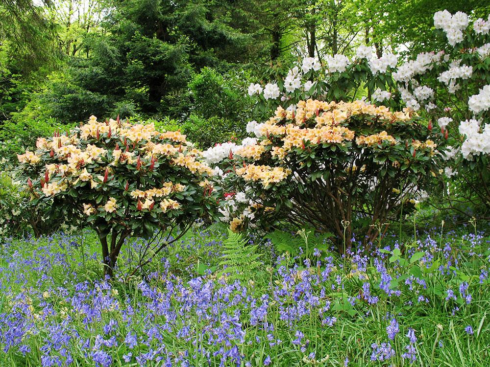 lukesland-spring-small-5ed.jpg
