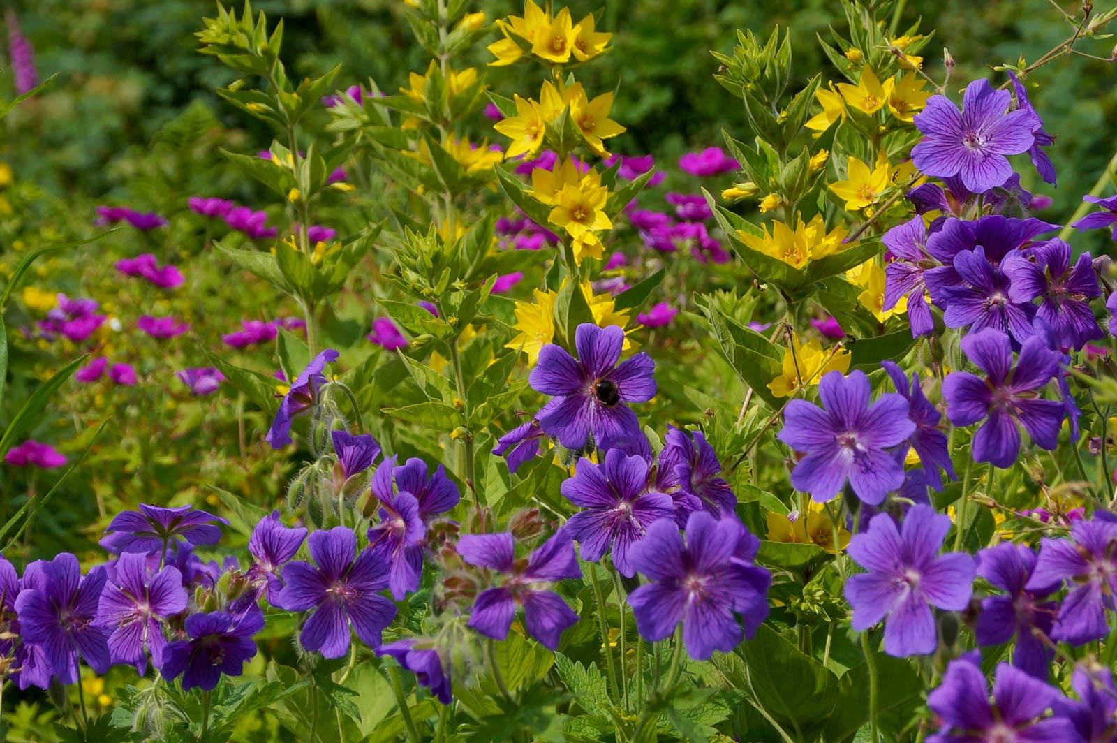 lukesland-spring-small-9edit.jpg