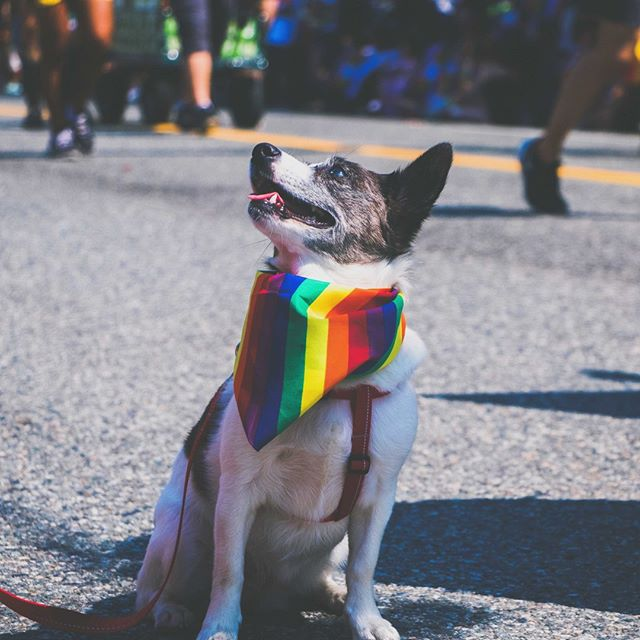 What a beautiful day, and how cute is this dog 😍? ⠀ You still have time to participate in our 'Pride19' competition 🙌. We would like to see all things pride, and the most colourful report wins a £20 Amazon gift voucher ✨ 🏳️🌈 (Deadline: 16/07/10)⠀ #loveislove #pride #shepper #shepperloveslove #friyay