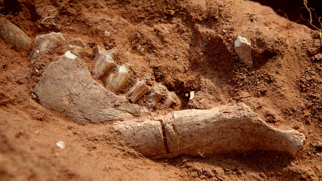 Remains dug up on the battlefield