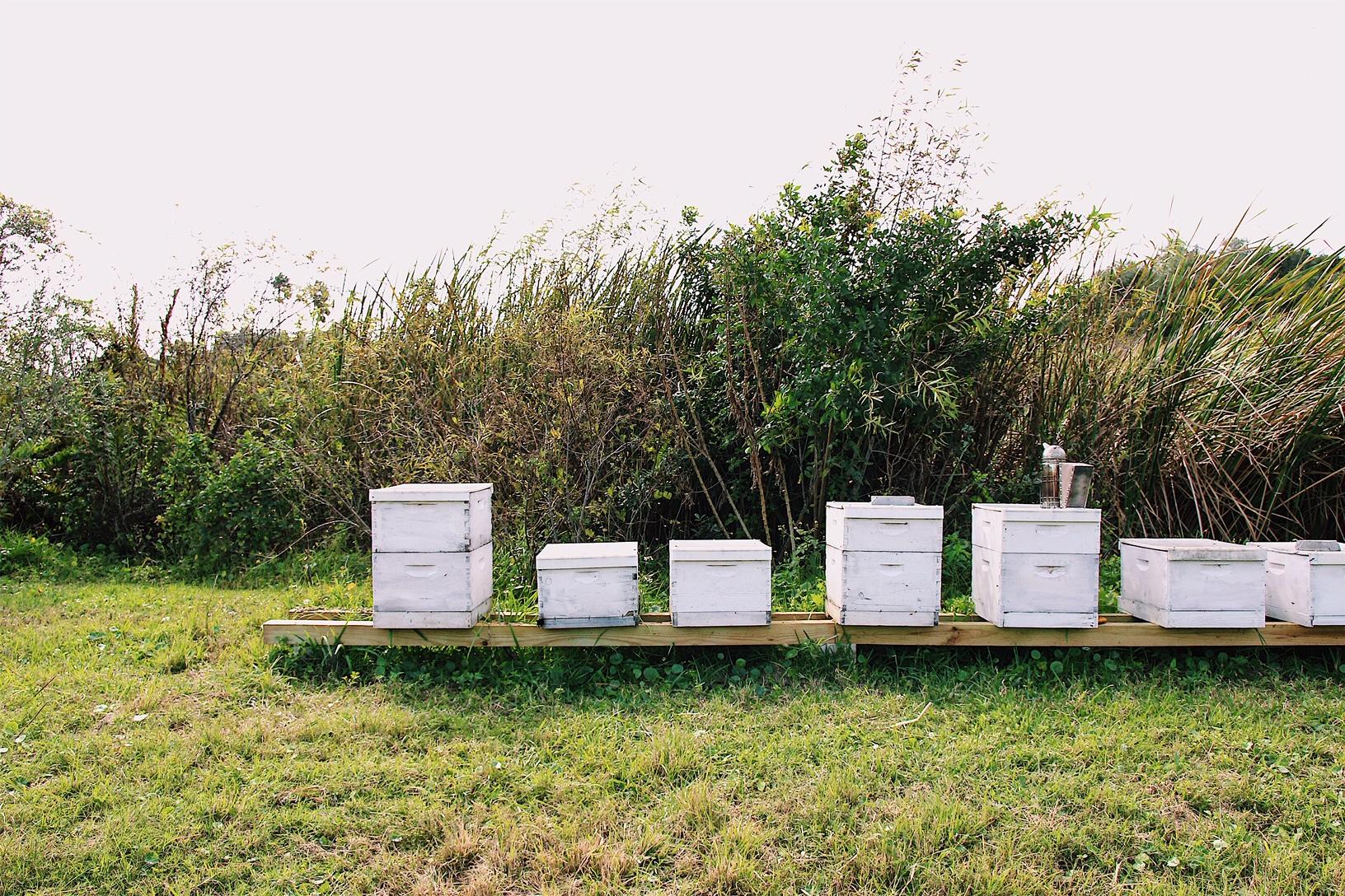 Bee Hive Tours -