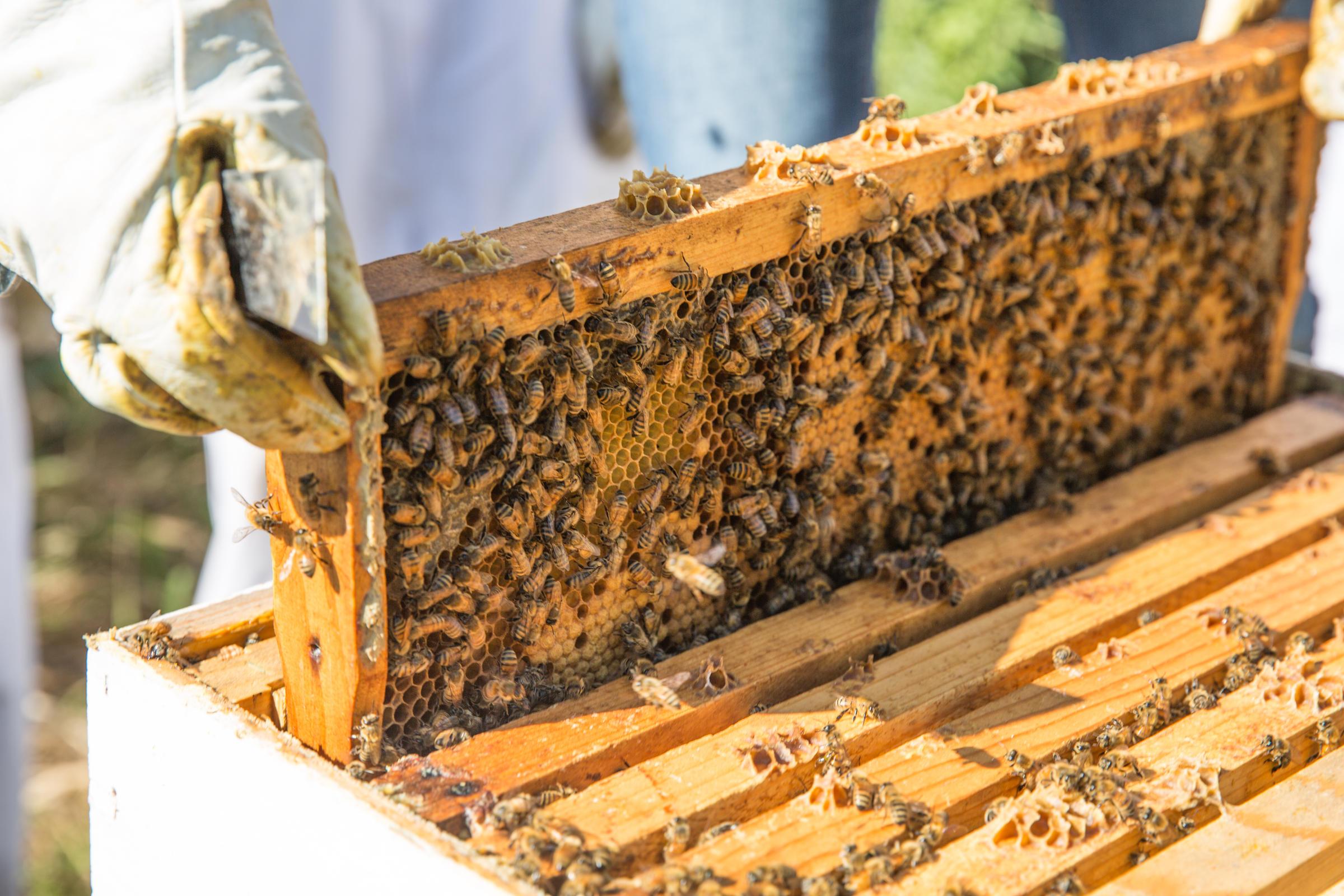 Get Started Beekeeping -