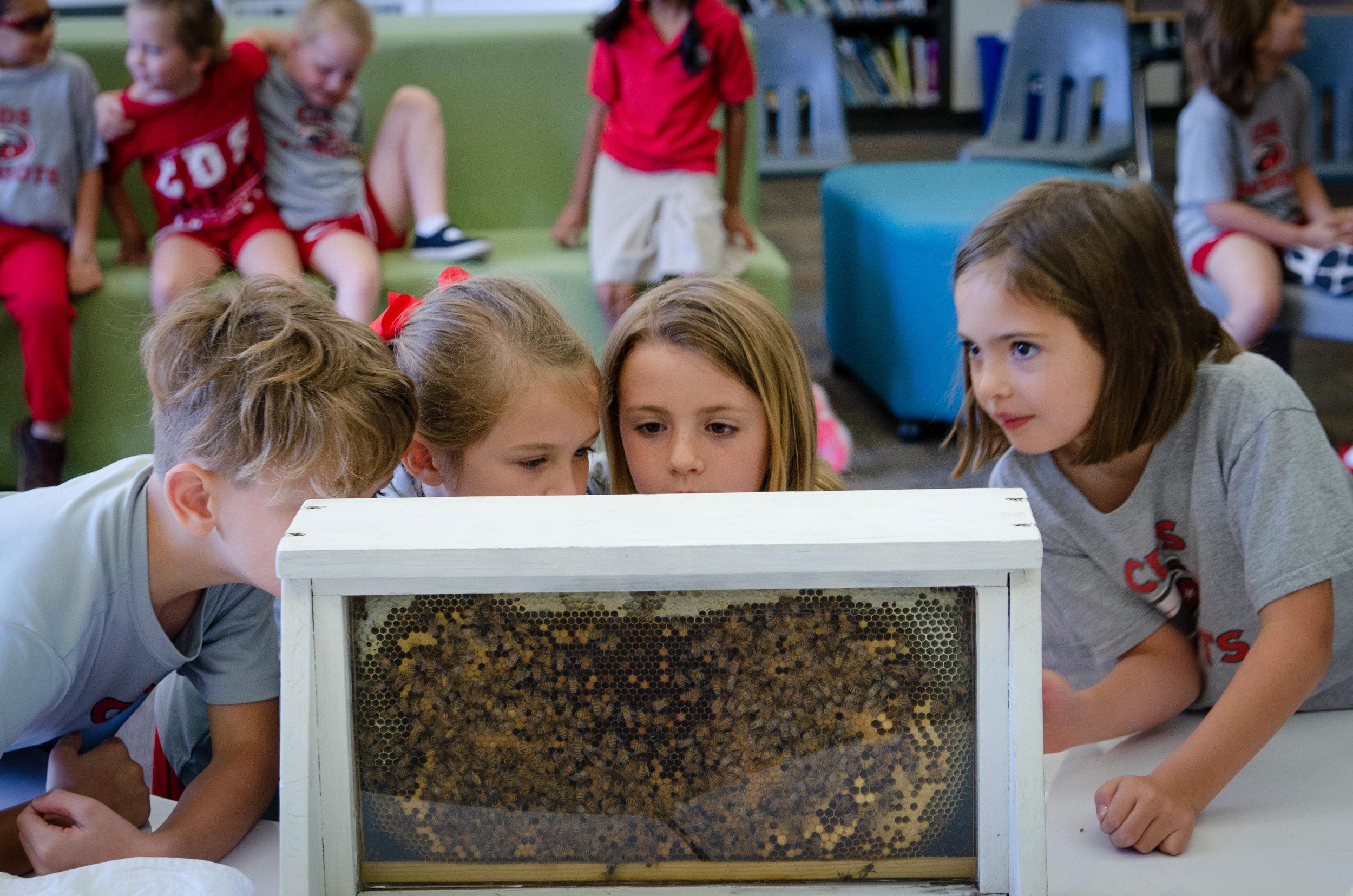 Honeybee Presentations -
