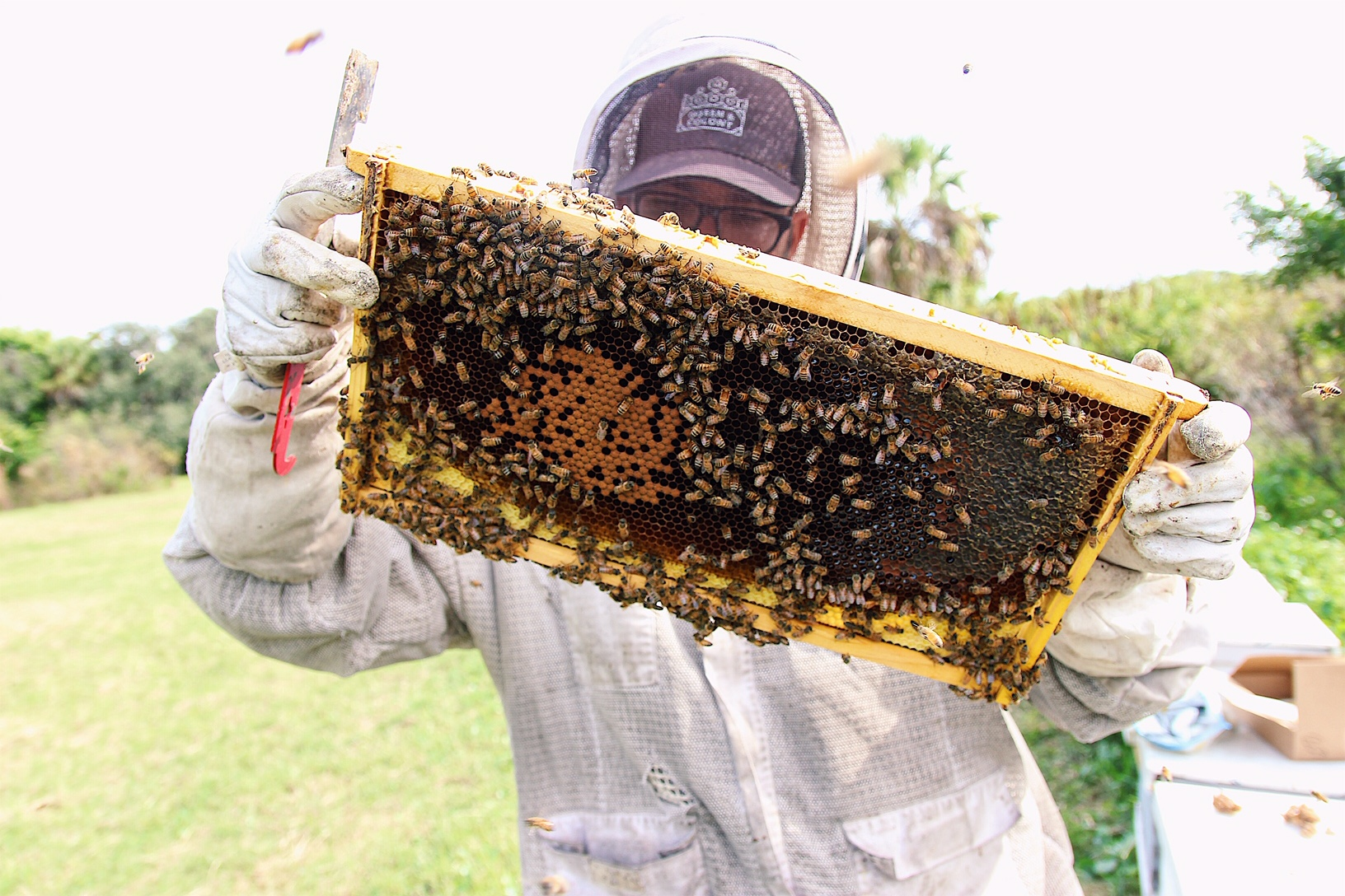 Beekeeping Services -