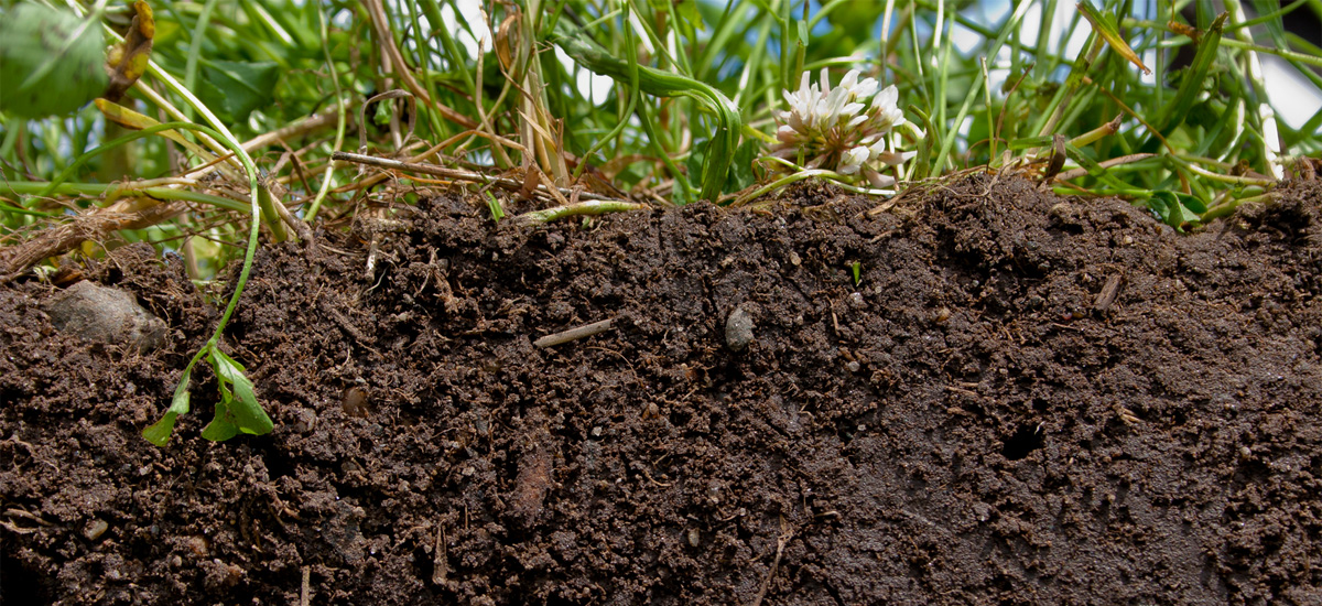 fa-sustainable-soil-cross-section.jpg
