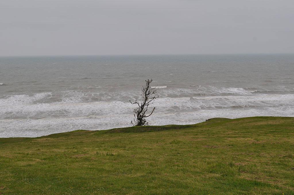 Normandy-GrassSeaandRandomTree.jpg