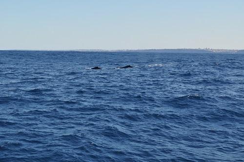 Whales_1.jpg