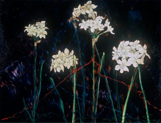 Narcissus Jubilee2.jpg