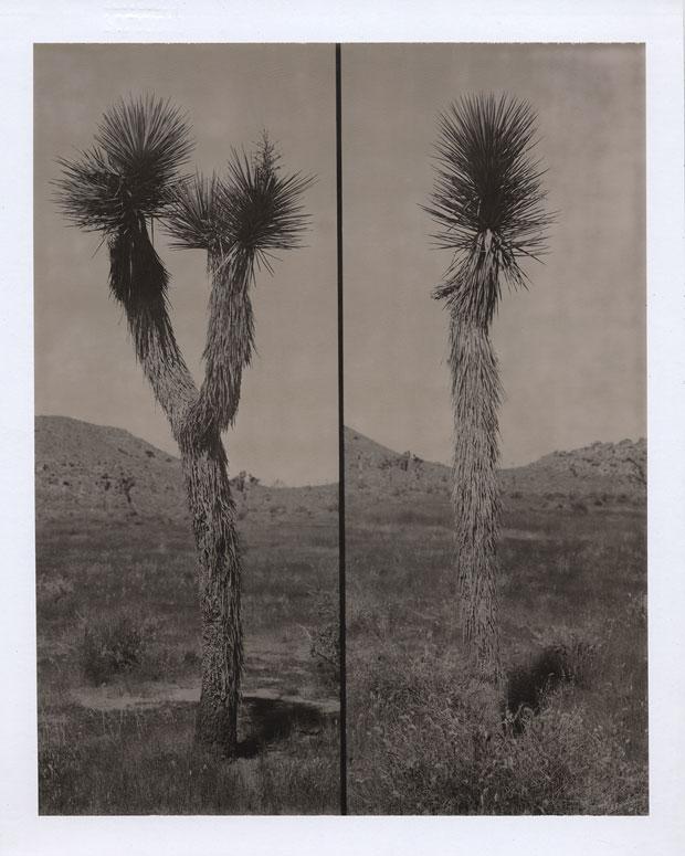 "JOSHUA TREE, 2005 8"" X 10"" POLAROID"