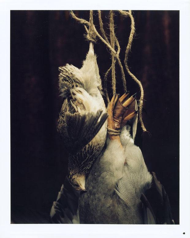 """DEAD QUAIL AND DUCK, 1999 8"""" X 10"""" POLAROID"""