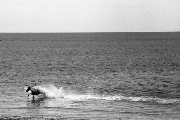 HORSE IN THE CELTIC SEA, PENZANCE, PENZANCE, ENGLAND, 2010 ARCHIVAL PIGMENT PRINT