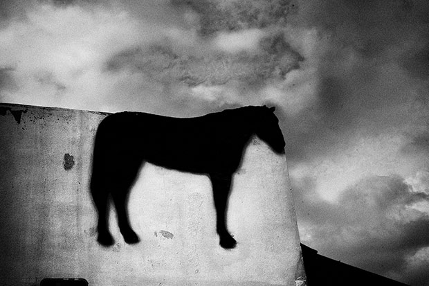 DAVID SAXE  FLOATING HORSE, SADDLE SHOP LAKE WORTH,  FL, 2009  ARCHIVAL DIGITAL PRINT