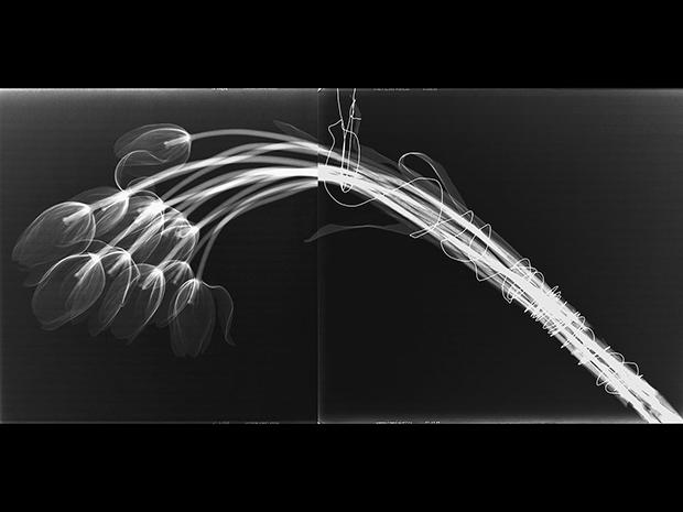TULIPS, 2016  X-RAY ON DIGITAL UV PIGMENT ON ALUMINUM