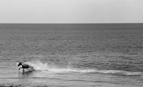 "ROBIN RICE, ""HORSE IN THE CELTIC SEA, PENZANCE"" 2010  GELATIN SILVER PRINT"