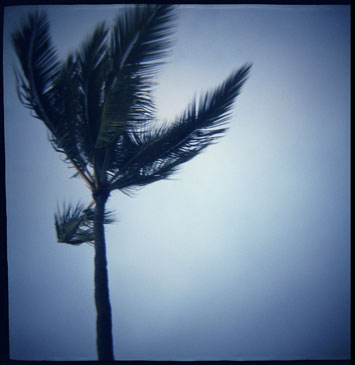 BLUE TREE, 2001   LANCE CLAYTON