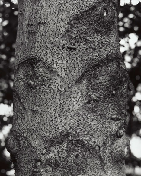 AMERICAN HOLLY - DETAIL, 2012   GELATIN SILVER PRINT