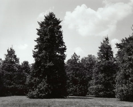 AMERICAN HOLLIES #2, 2012 GELATIN SILVER PRINT