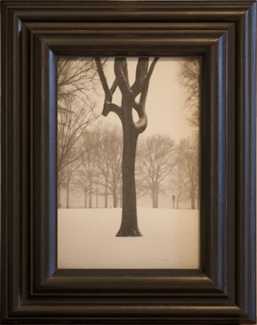 TREE, CENTRAL PARK, NY, 2004  SILVER GELATIN PRINT one of a kind handmade antique frame
