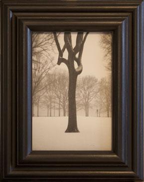 TREE, CENTRAL PARK , 2004   SILVER GELATIN PRINT one of a kind handmade antique frame