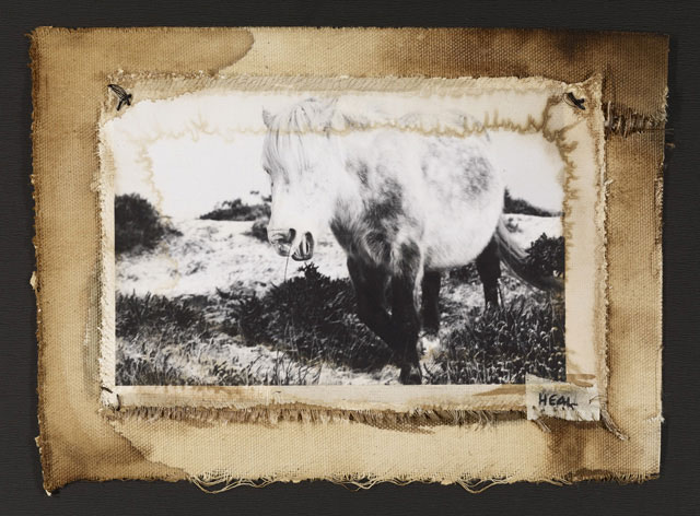 DAPPLE GREY HILL PONY, 2007   ONE OF A KIND PHOTOGRAPH ON CANVAS WITH MIXED MEDIA