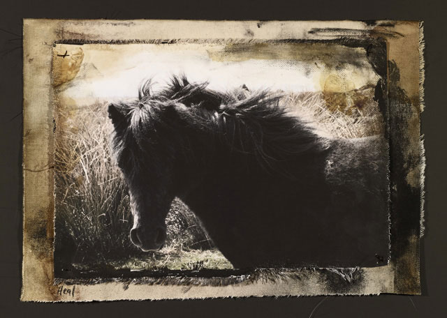 MR. DARCY. 2010   ONE OF A KIND PHOTOGRAPH ON CANVAS WITH MIXED MEDIA