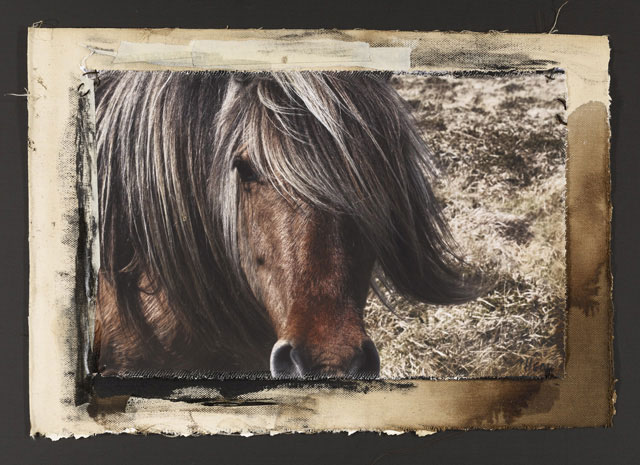 HILL PONY #2, 2010   ONE OF A KIND PHOTOGRAPH ON CANVAS WITH MIXED MEDIA