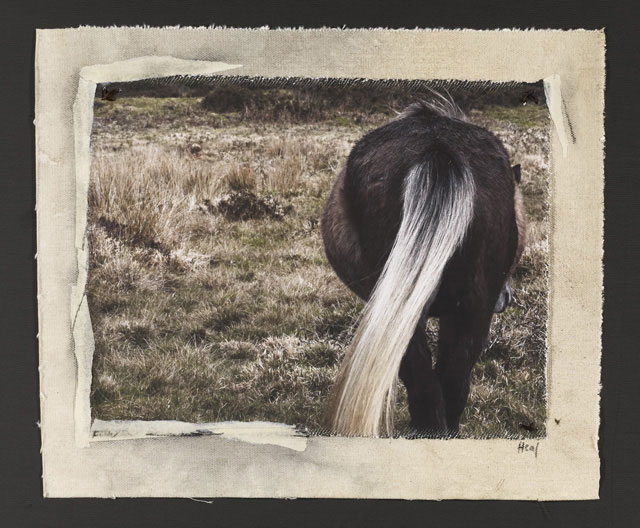 HINDQUARTERS, 2010   ONE OF A KIND PHOTOGRAPH ON CANVAS WITH MIXED MEDIA