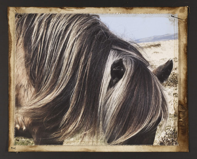 HILL PONY #1, 2010   ONE OF A KIND PHOTOGRAPH ON CANVAS WITH MIXED MEDIA