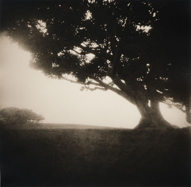 PEPPERDINE TREES, 2001  LITH PRINT