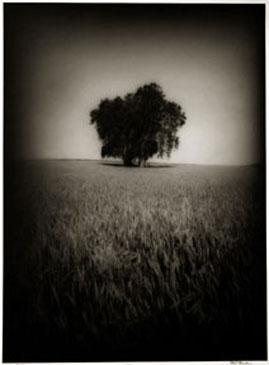 GRAIN FIELD, 2004  Photographer: Ron Tarver TONED SILVER GELATIN