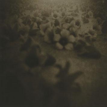 FALLEN FLOWERS, 2000  MUSEUM QUALITY LYTH PRINT