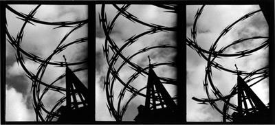 BARBEDWIRELOVE, 1995   SILVER GELATIN