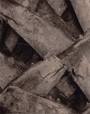 PALMYRA PALM, 2004    BROWN TONED/SILVER GELATIN