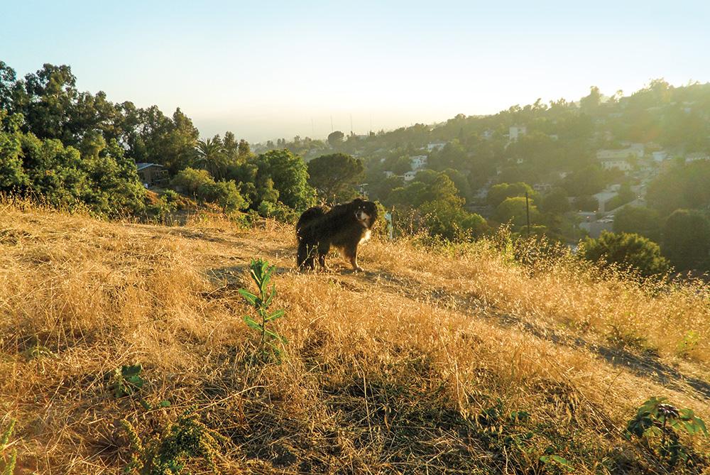 Man's Best Friend on Kite Hill