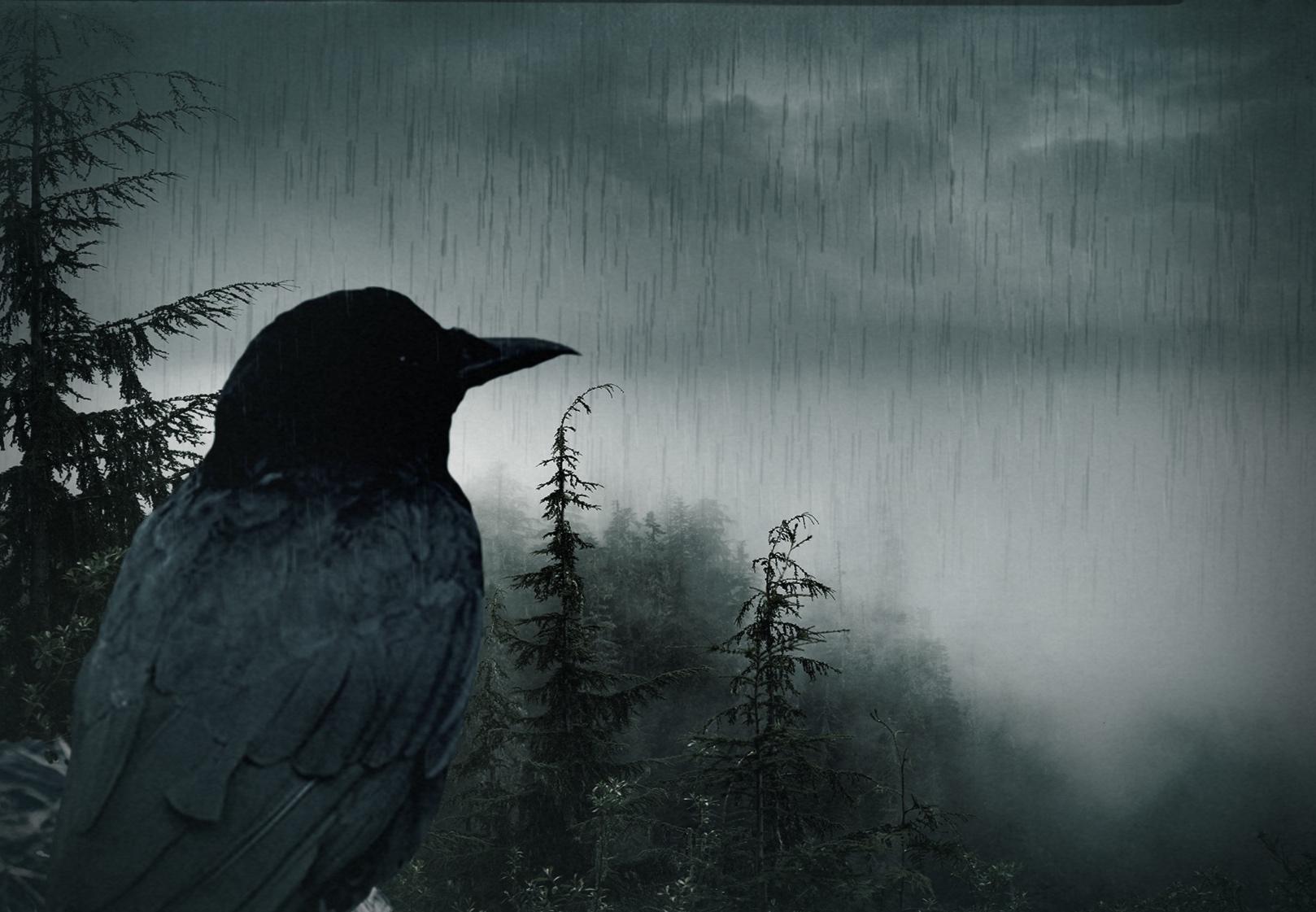 RavensittingrainforFB.jpg