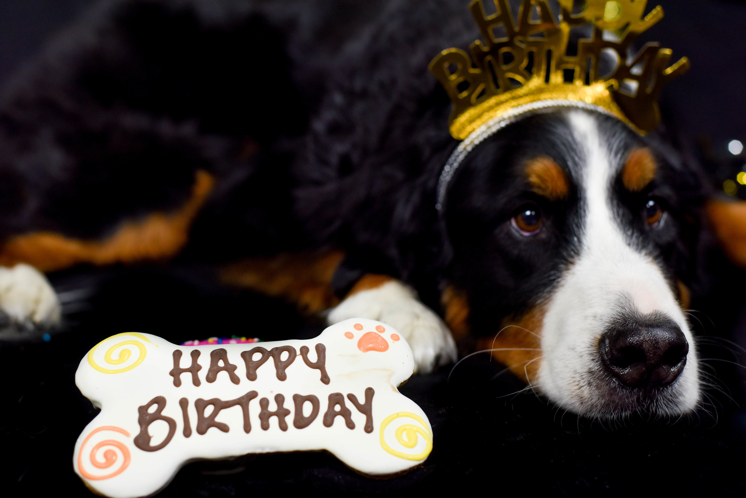 koda 9th bday 17©Rachael Zimmerman -3768.jpg