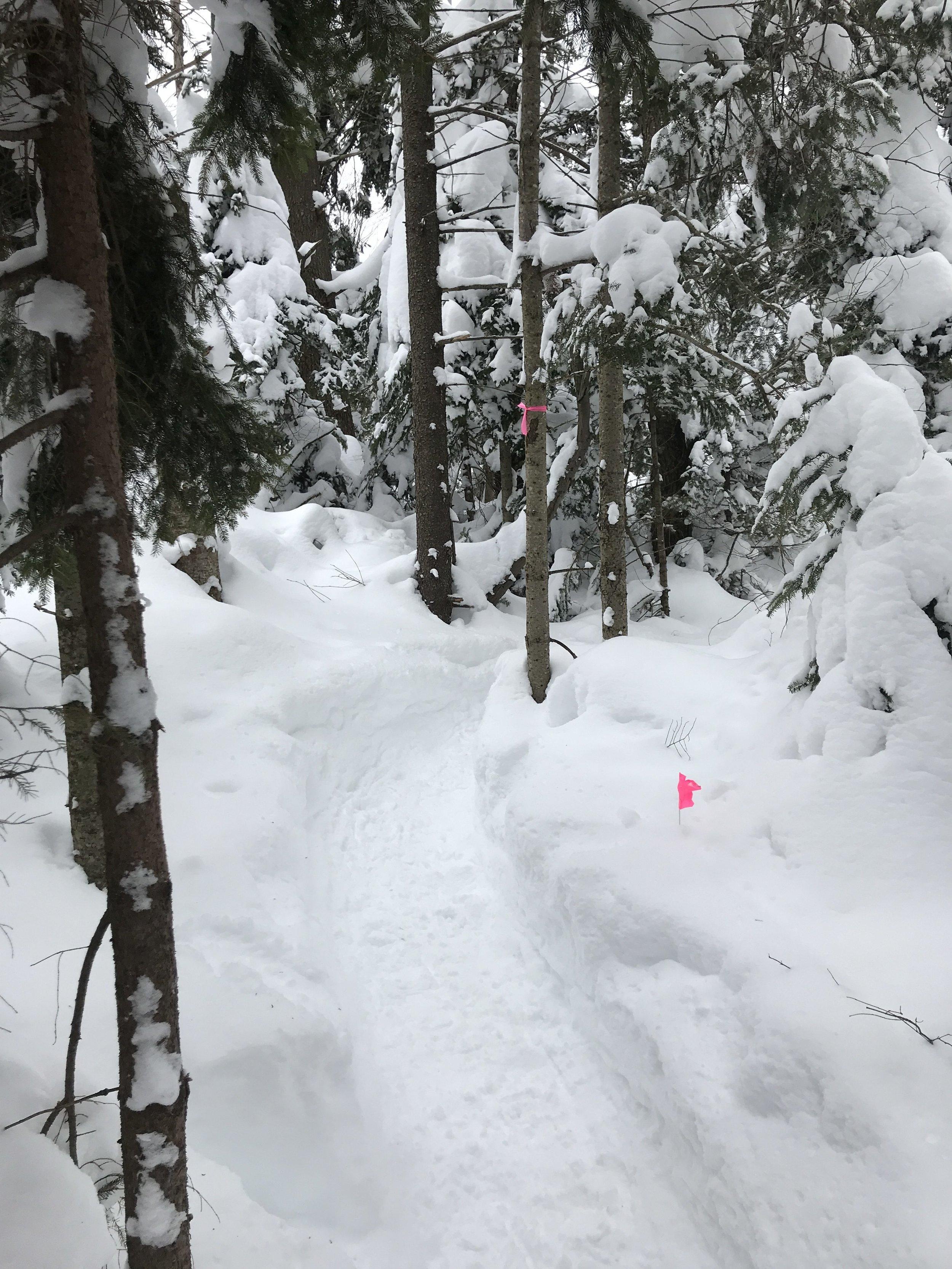 Snowshoe National Champs Run Far Girl