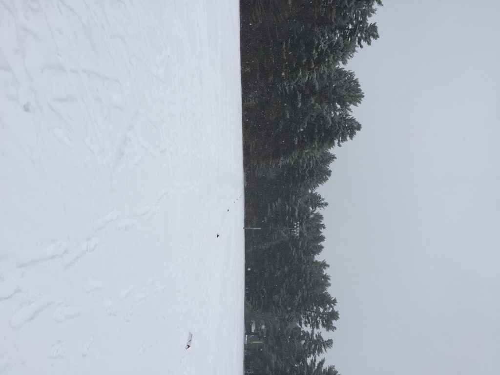 whitaker woods snowshoe scramble 2016