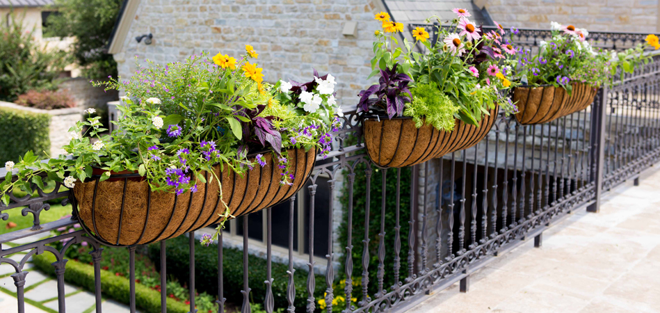 Assorted Hanging Baskets & Planters